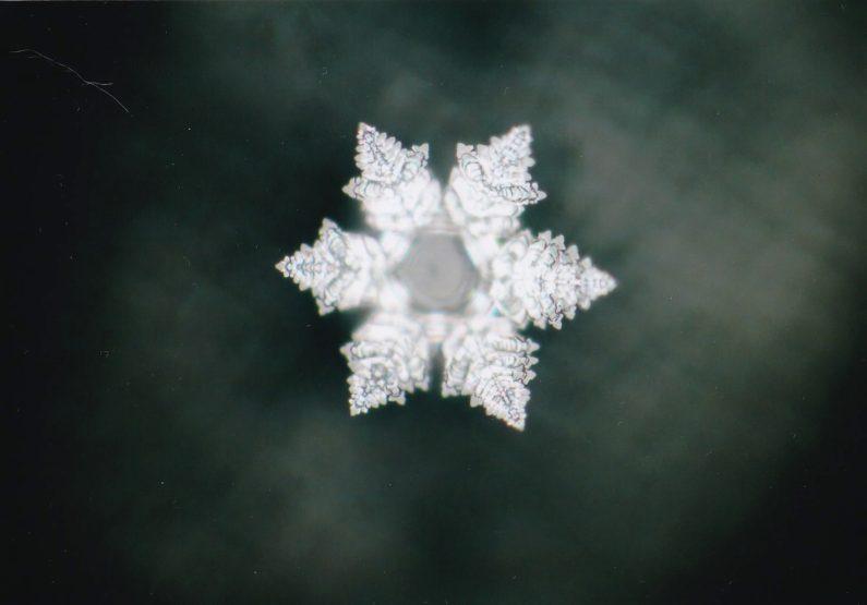 美しい結晶をつくる歌声は自然と調和した健康に良い水を生む。